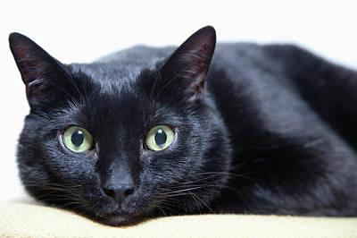 Portrait Of A Cat Art Print