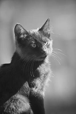 Photograph - Portrait Of A Kitty by Kim Henderson
