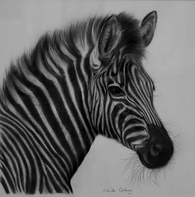 Charcoal Horse Drawing - Portrait Of A Lady by Lucinda Coldrey