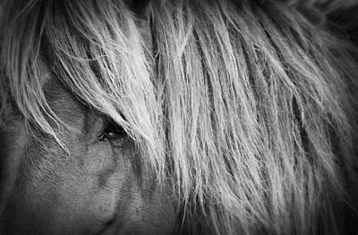 Photograph - Portrait Of A Wild Horse by Bob Decker