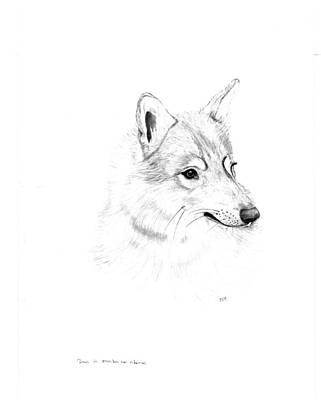 Portrait Of A Wolf Art Print by Peter Edward Green