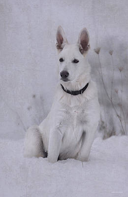 White German Shepherd Dog Photograph - Portrait Of A Young Dog by Ron Jones