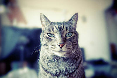 Cats Photograph - Portrait Of Cat by William Andrew