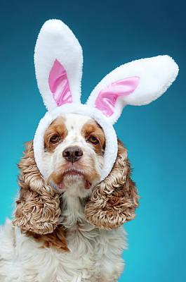 Portrait Of Dog Wearing Easter Bunny Ears Art Print by Jade Brookbank
