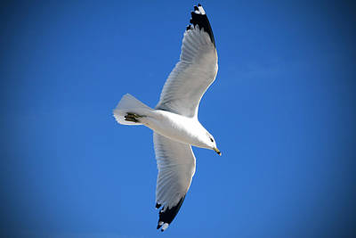 Gesicht Photograph - Portrait Of Seagull by Maxim Sivyi