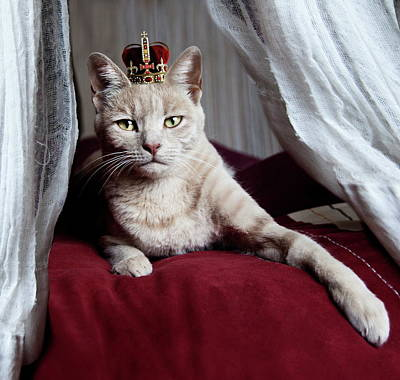 Portrait Of White Cat With Crown On Head Art Print
