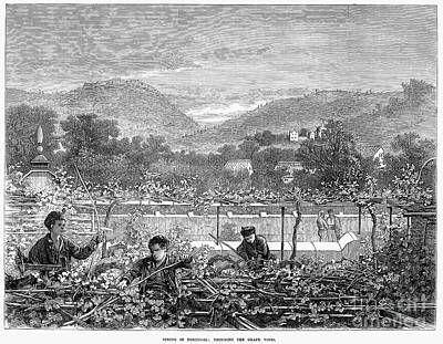Portugal: Vineyard, 1873 Art Print