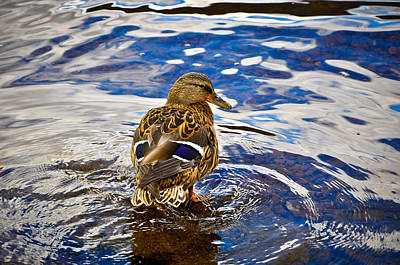 Posing Duck Art Print by Erica McLellan