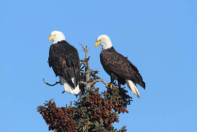 Photograph - Posing Pair by Doug Lloyd