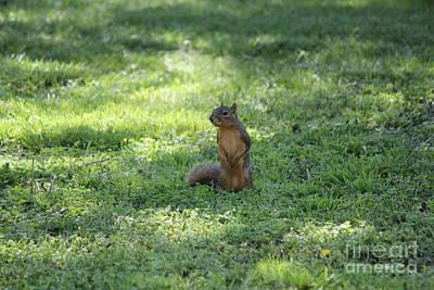 Posing Squirrel Art Print