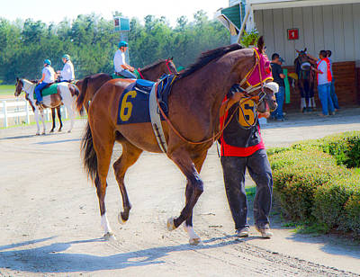Blood Bay Horse Photograph - Post-time Parade by Betsy Knapp