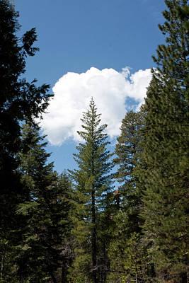 Photograph - Postcard Pines by Lorraine Devon Wilke