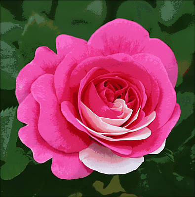 Poster Rose Art Print by Jim Speirs