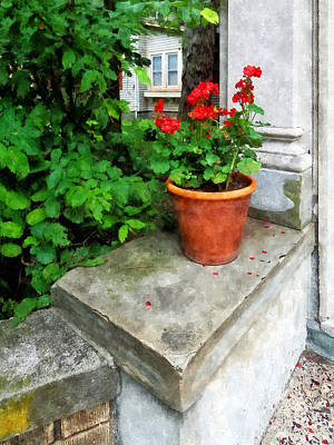 Photograph - Pot Of Geraniums On Stoop by Susan Savad