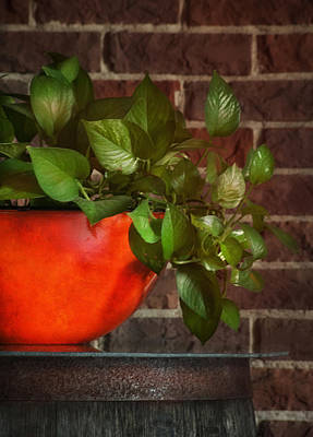 Photograph - Pot Of Greens by Brenda Bryant