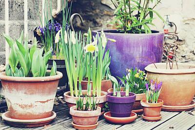 Sunlight On Pots Photograph - Pot Plants by Lespetitsriens