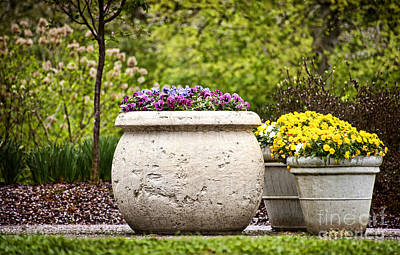 Art Print featuring the photograph Pots Of Pansies by Cheryl Davis