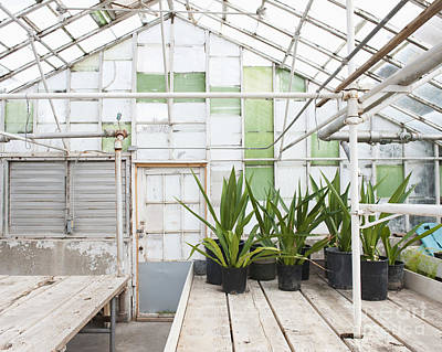 Potted Plants In A Greenhouse Art Print by Thom Gourley/Flatbread Images, LLC