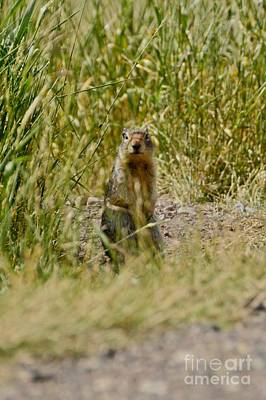 Photograph - Prairie Dog by Cassie Marie Photography