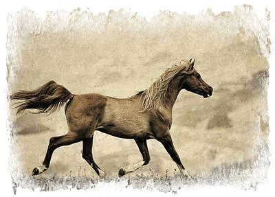 Horse Photograph - Prancer by Patty Hallman