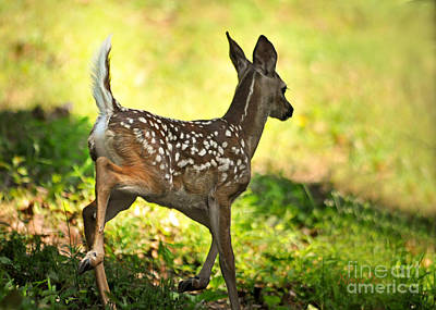 Art Print featuring the photograph Prancing Fawn by Nava Thompson