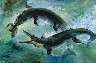 Pre-historic Crocodiles Eating A Fish Art Print by Unknown