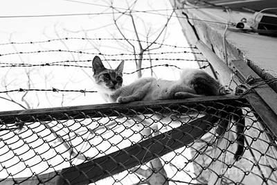 Photograph - Precarious by Dean Harte