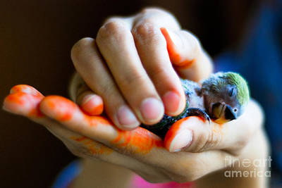 Fine Art Choices Photograph - Precious Life by Syed Aqueel