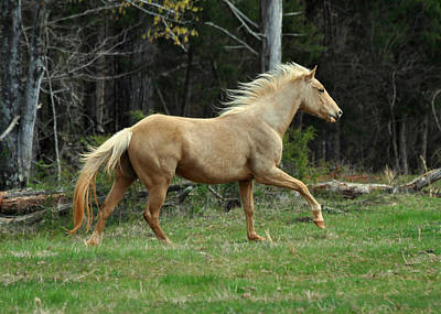 Precious The Palomino Running  - C0519c Art Print