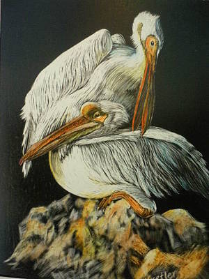Mixed Media - Preening Pelicans by Pauline  Kretler