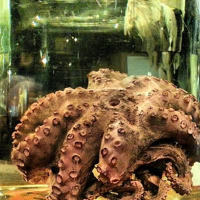 Octopus Wall Art - Photograph - #preserved #glass #jar #octopus #witte by Clifford McClure