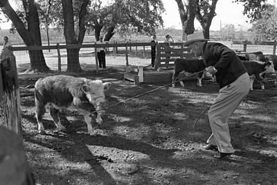Lyndon Photograph - President Lyndon Johnson Roping Calves by Everett