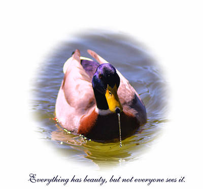 Photograph - Pretty Duck by Kelly Reber