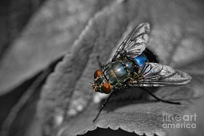 Photograph - Pretty Fly For A Fly Guy by Yhun Suarez