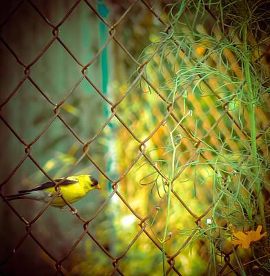 Mixed Media - Pretty Goldfinch by Connie Dye