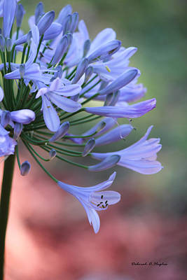 Photograph - Pretty In Blue by Deborah Hughes