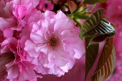 Pretty In Pink Blossom Art Print