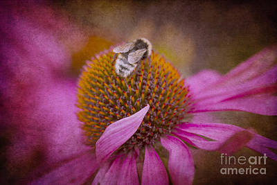 Photograph - Pretty In Pink by Clare Bambers