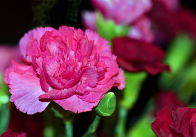 Pretty In Pink Art Print by Sandi OReilly