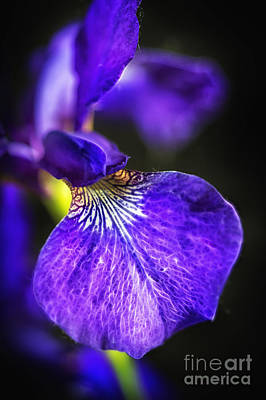 Photograph - Pretty In Purple by Sandra Bronstein
