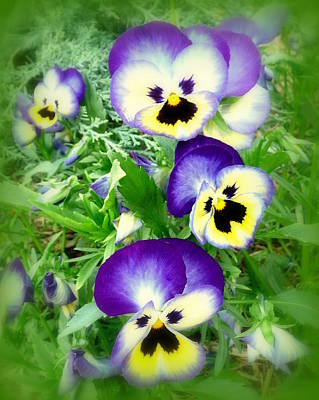 Flower Photograph - Pretty Pansy Faces by Cindy Wright