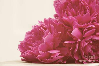 Pretty Pink Peonies Print by Kim Fearheiley