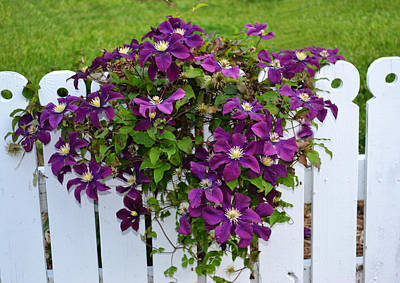 Photograph - Pretty Purple Flowers by Kelly Reber