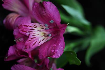 Photograph - Pretty Violet Flower by Sheila Kay McIntyre