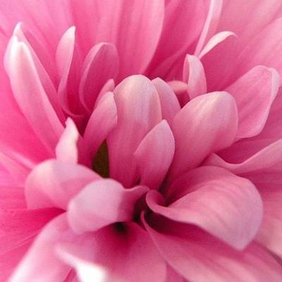 Expression Wall Art - Photograph - #prettyinpink #flowers #lovely by Marian  Alleva