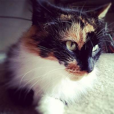 Pet Photograph - #prettykitty #catwomen #cat #pet #love by Mandy Shupp