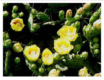 Photograph - Prickley And Yellow by Frank Wickham
