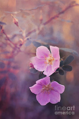 Healing Photograph - Prickly Rose by Priska Wettstein