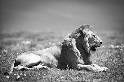 Photograph - Pride In Black And White by Sebastian Musial