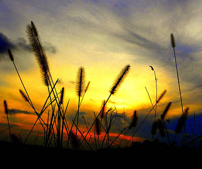 Photograph - Primary Sunset by Sheri McLeroy